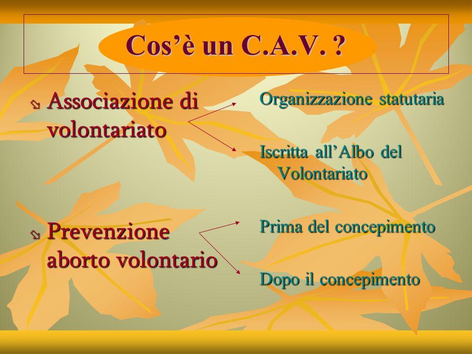 C.A.V. M.P.V.