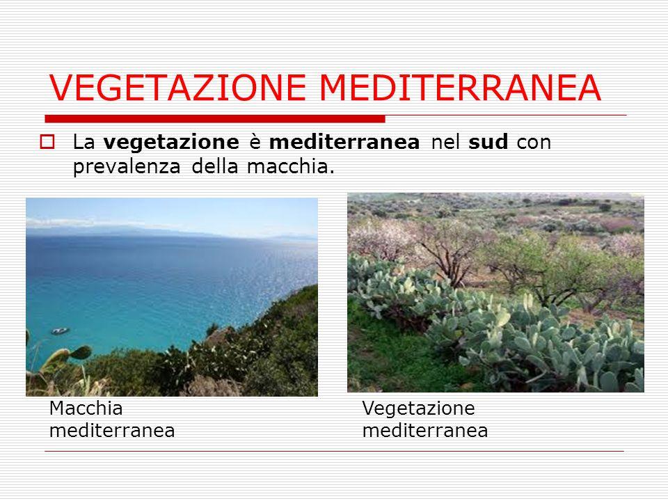 VEGETAZIONE MEDITERRANEA  La vegetazione è mediterranea nel sud con prevalenza della macchia. Macchia mediterranea Vegetazione mediterranea