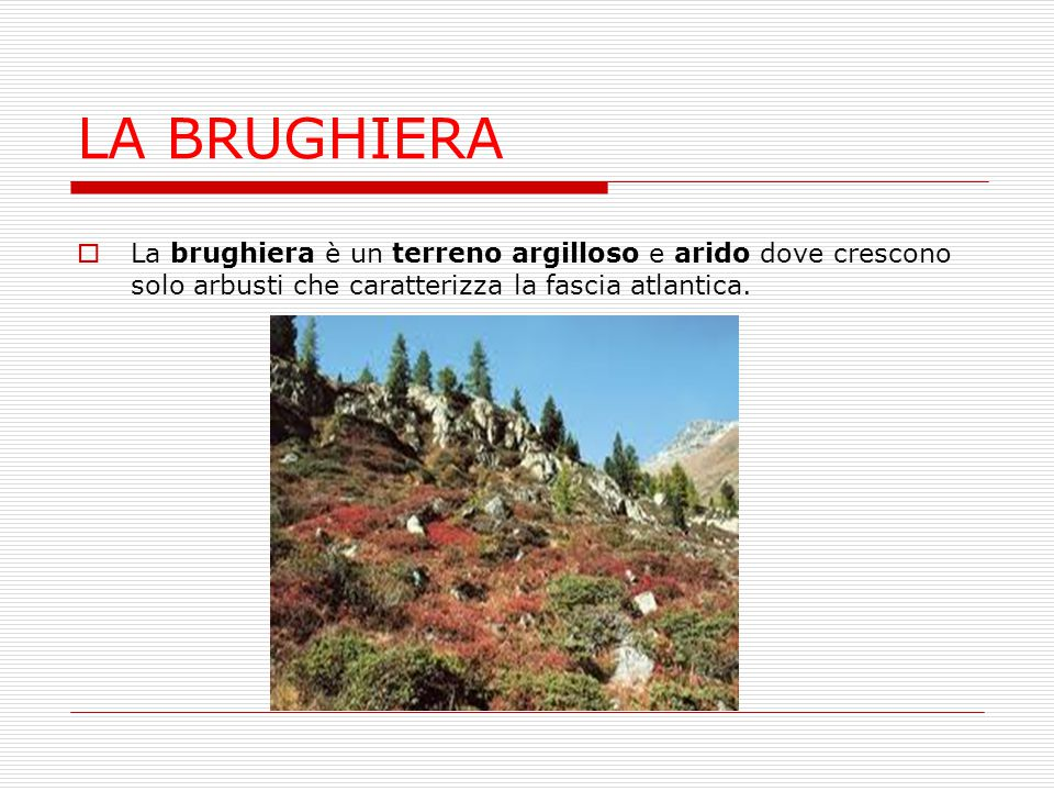 LA BRUGHIERA  La brughiera è un terreno argilloso e arido dove crescono solo arbusti che caratterizza la fascia atlantica.
