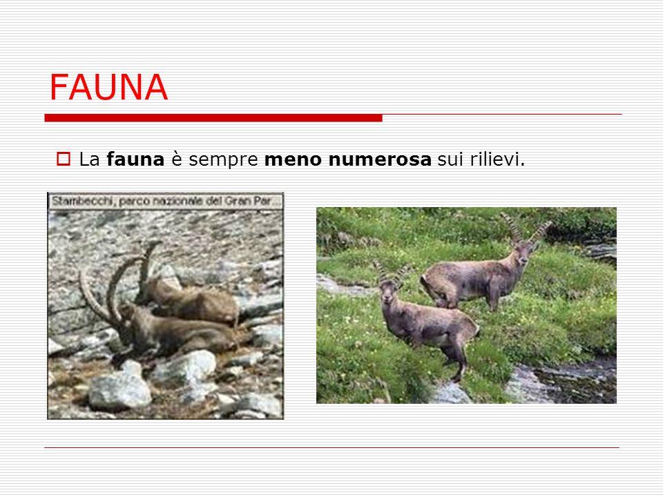 FAUNA  La fauna è sempre meno numerosa sui rilievi.