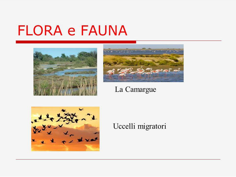 La Camargue Uccelli migratori FLORA e FAUNA