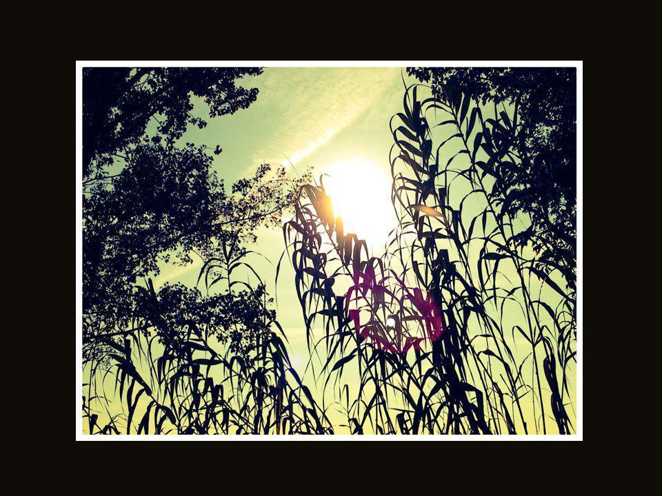 L'ultimo sole…