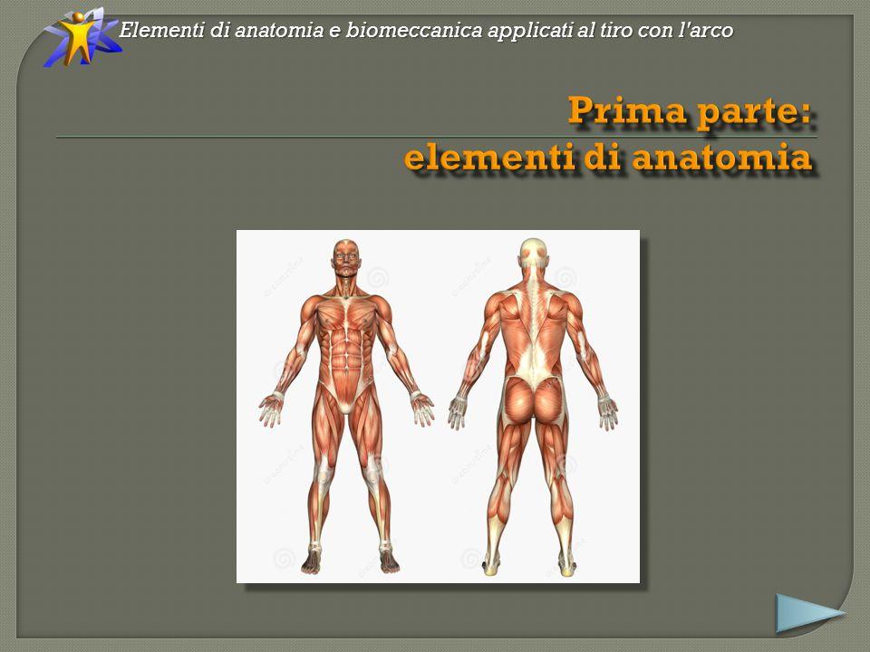 Elementi di anatomia e biomeccanica applicati al tiro con l arco Equilibrio dell'apparato stomatognatico !