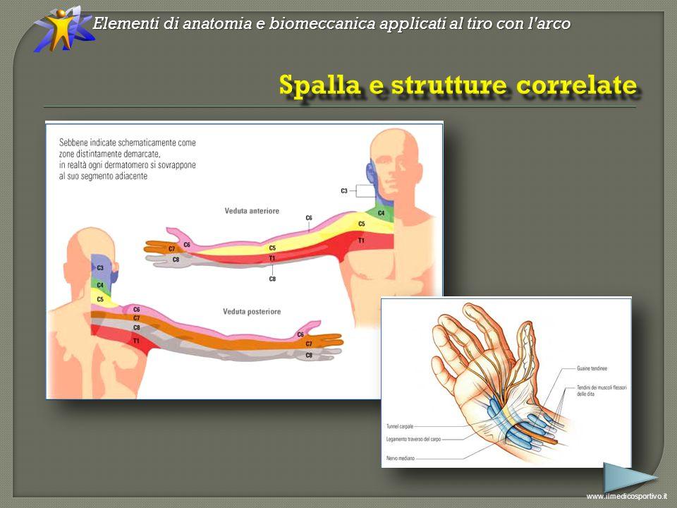 Elementi di anatomia e biomeccanica applicati al tiro con l arco www.ilmedicosportivo.it