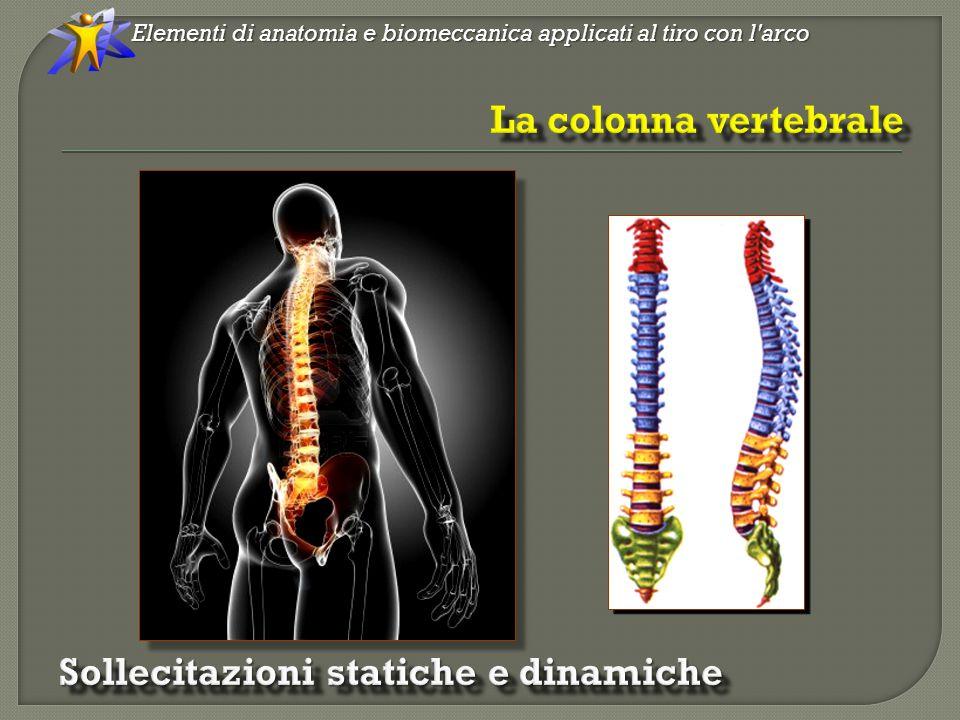 Il nostro organismo è composto da numerose catene cinetiche: i segmenti sono rappresentati dalle ossa e le articolazioni rappresentano i giunti.