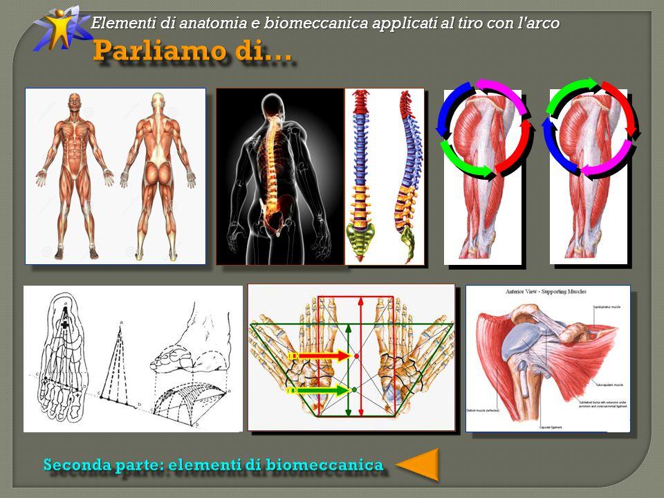 Elementi di anatomia e biomeccanica applicati al tiro con l arco