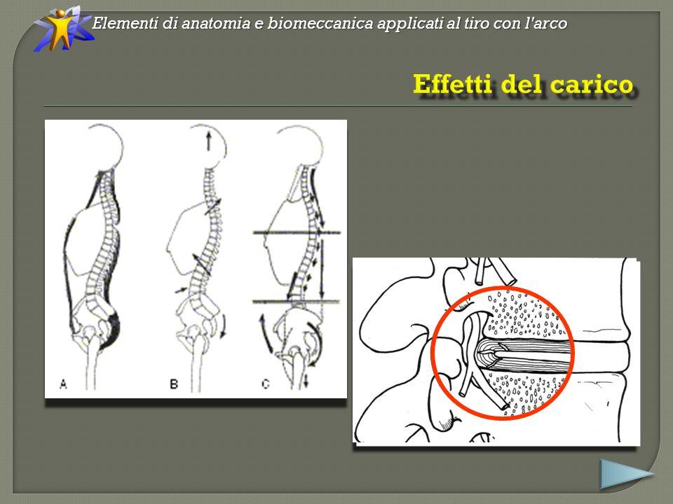 Elementi di anatomia e biomeccanica applicati al tiro con l arco Nel rilascio l energia meccanica (cinetica e potenziale elastica) di un elemento di massa (il riser sollecitato dai flettenti) viene trasmessa a quello adiacente (la mano).
