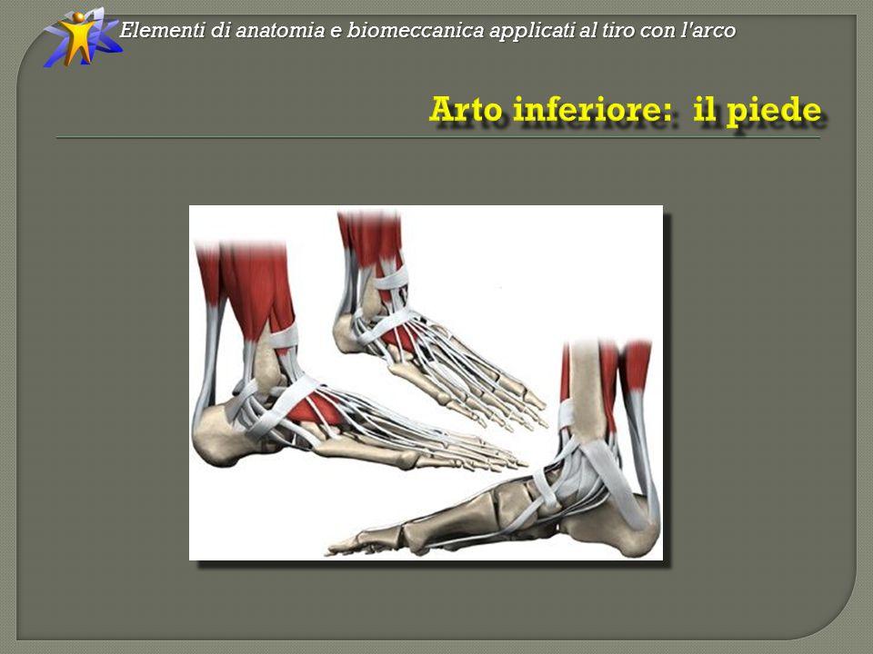 MC Elementi di anatomia e biomeccanica applicati al tiro con l arco
