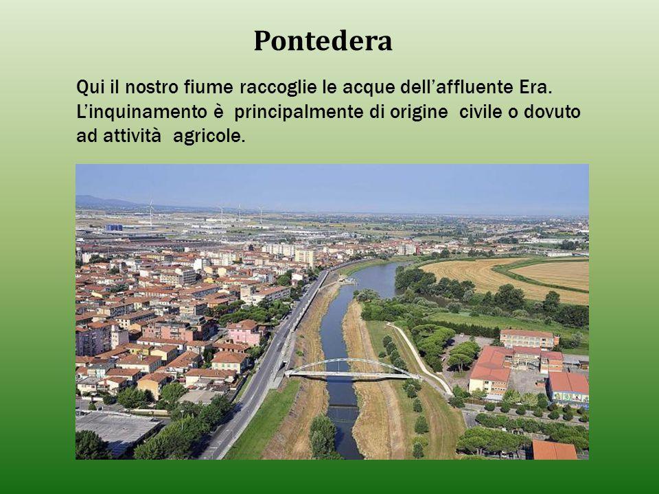 Pontedera Qui il nostro fiume raccoglie le acque dell'affluente Era. L'inquinamento è principalmente di origine civile o dovuto ad attività agricole.