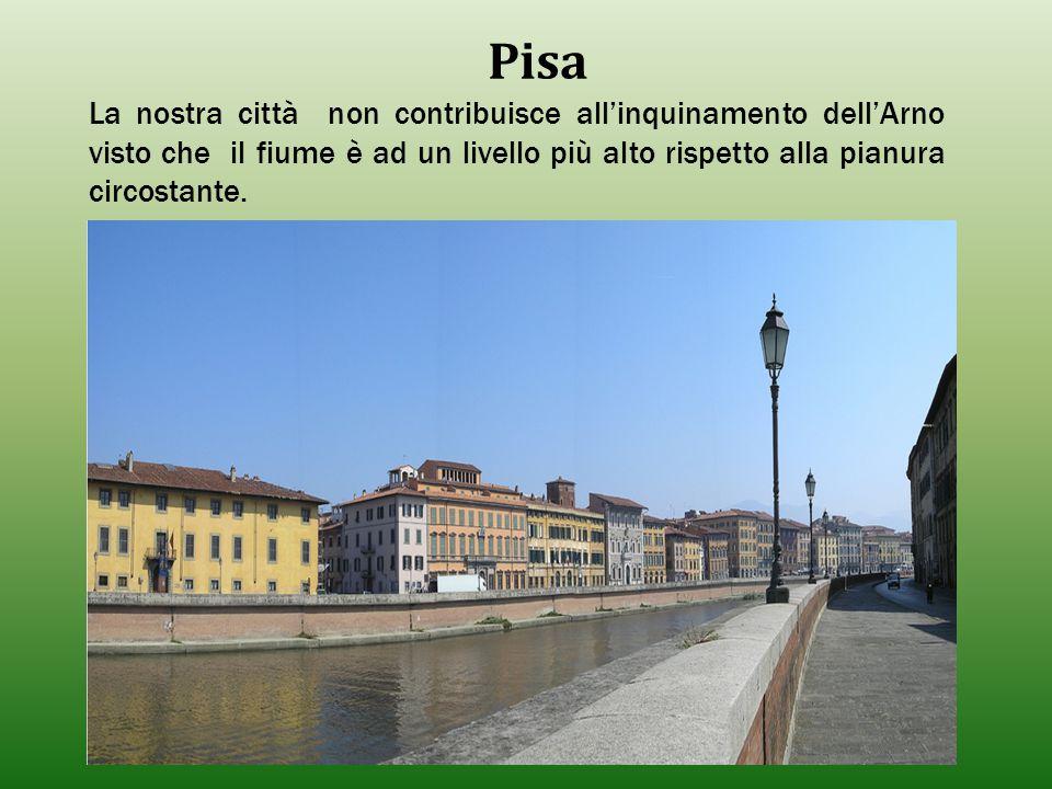 Pisa La nostra città non contribuisce all'inquinamento dell'Arno visto che il fiume è ad un livello più alto rispetto alla pianura circostante.