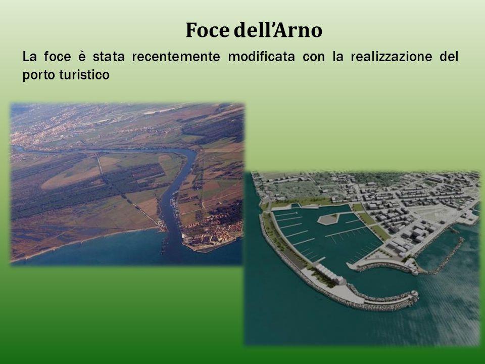 Foce dell'Arno La foce è stata recentemente modificata con la realizzazione del porto turistico