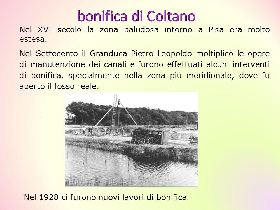 . Nel XVI secolo la zona paludosa intorno a Pisa era molto estesa. Nel Settecento il Granduca Pietro Leopoldo moltiplicò le opere di manutenzione dei