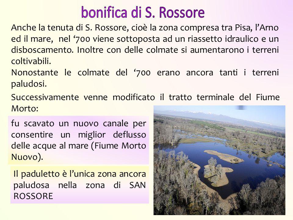 Il paduletto è l'unica zona ancora paludosa nella zona di SAN ROSSORE Anche la tenuta di S. Rossore, cioè la zona compresa tra Pisa, l'Arno ed il mare