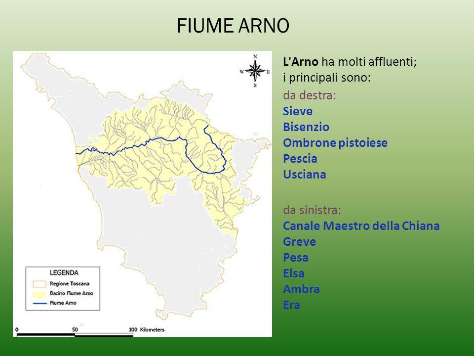 FIUME ARNO L'Arno ha molti affluenti; i principali sono: da destra: Sieve Bisenzio Ombrone pistoiese Pescia Usciana da sinistra: Canale Maestro della
