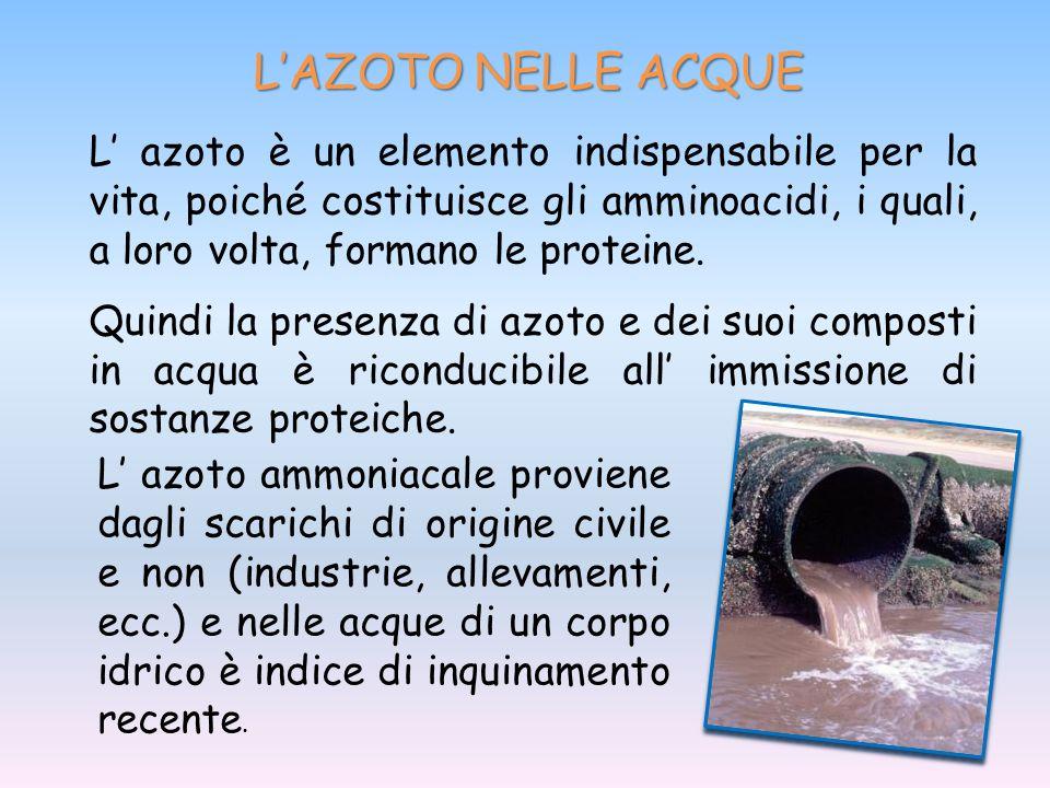 L'AZOTO NELLE ACQUE L' azoto è un elemento indispensabile per la vita, poiché costituisce gli amminoacidi, i quali, a loro volta, formano le proteine.