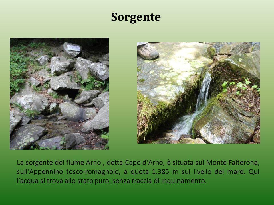 La sorgente del fiume Arno, detta Capo d'Arno, è situata sul Monte Falterona, sull'Appennino tosco-romagnolo, a quota 1.385 m sul livello del mare. Qu