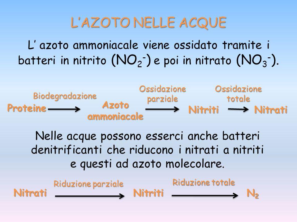 L' azoto ammoniacale viene ossidato tramite i batteri in nitrito (NO 2 - ) e poi in nitrato (NO 3 - ). Proteine Biodegradazione Azoto ammoniacale Ossi