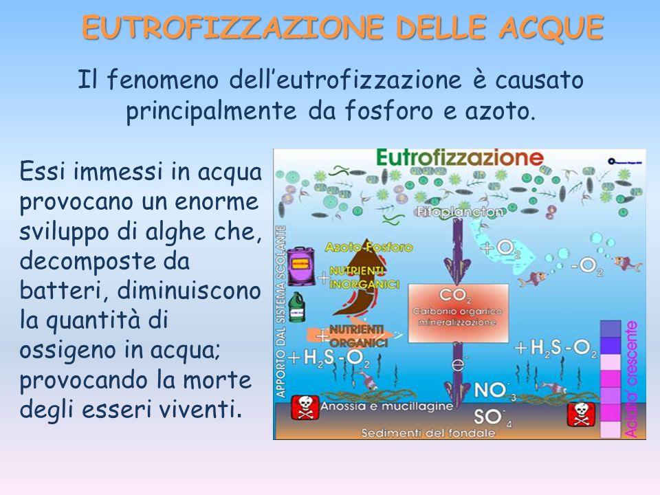 EUTROFIZZAZIONE DELLE ACQUE Il fenomeno dell'eutrofizzazione è causato principalmente da fosforo e azoto. Essi immessi in acqua provocano un enorme sv
