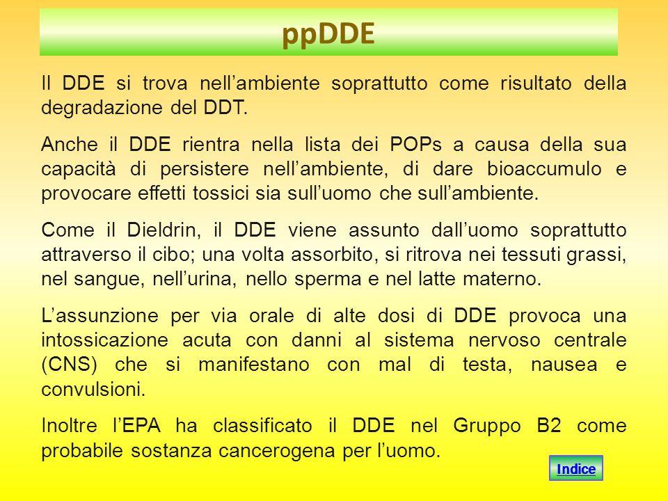 Il DDE si trova nell'ambiente soprattutto come risultato della degradazione del DDT. Anche il DDE rientra nella lista dei POPs a causa della sua capac