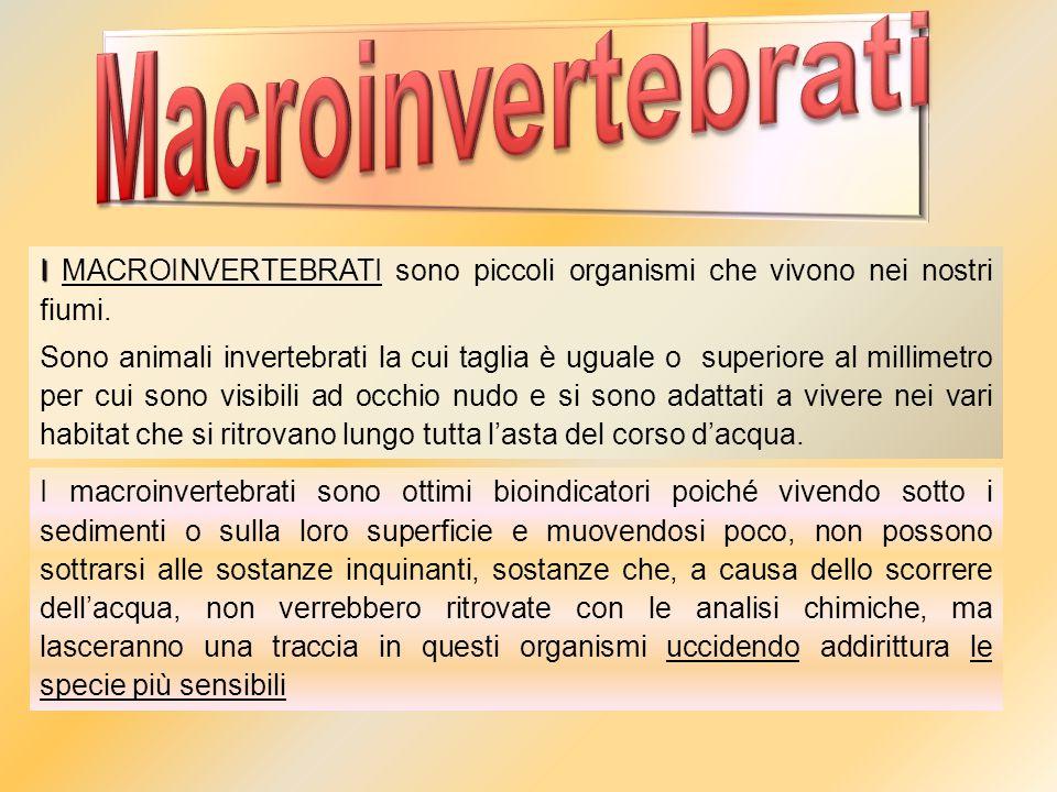 I I MACROINVERTEBRATI sono piccoli organismi che vivono nei nostri fiumi. Sono animali invertebrati la cui taglia è uguale o superiore al millimetro p