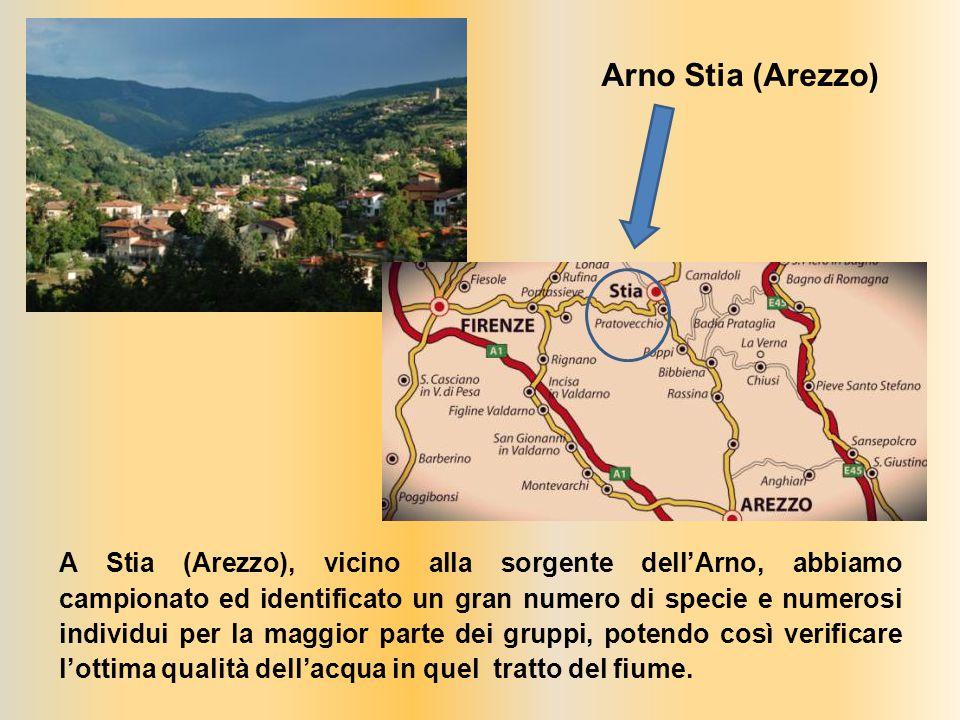 A Stia (Arezzo), vicino alla sorgente dell'Arno, abbiamo campionato ed identificato un gran numero di specie e numerosi individui per la maggior parte