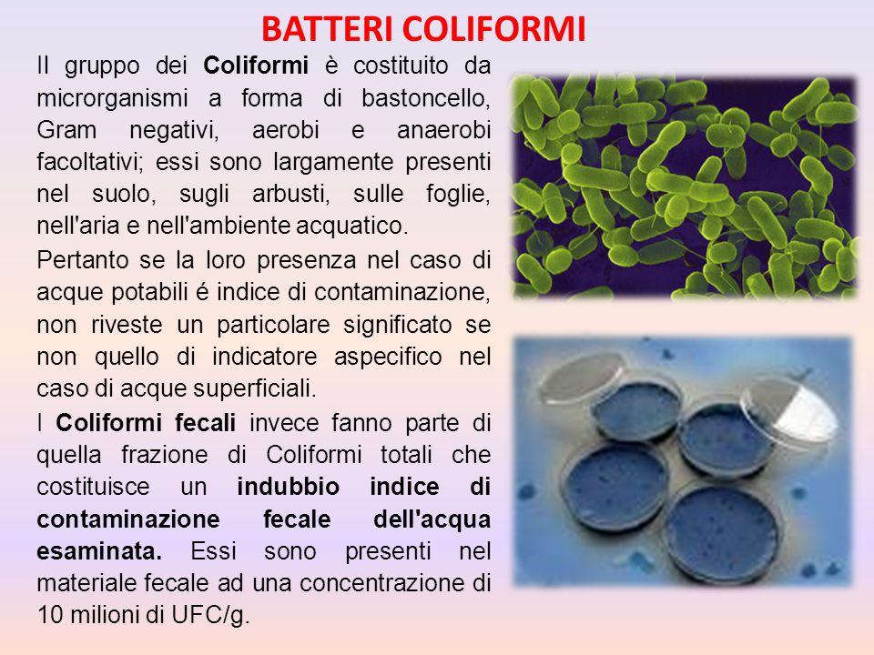 Il gruppo dei Coliformi è costituito da microrganismi a forma di bastoncello, Gram negativi, aerobi e anaerobi facoltativi; essi sono largamente prese