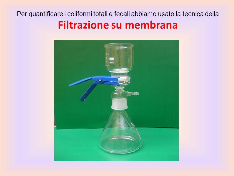 Per quantificare i coliformi totali e fecali abbiamo usato la tecnica della Filtrazione su membrana