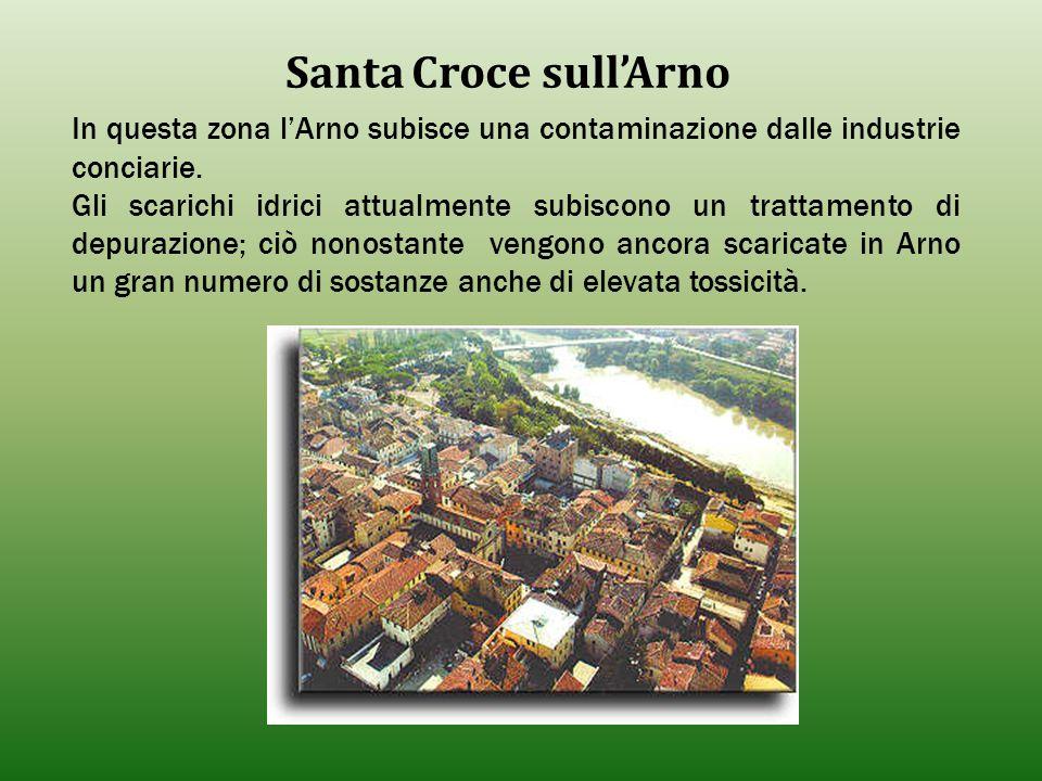 Santa Croce sull'Arno In questa zona l'Arno subisce una contaminazione dalle industrie conciarie. Gli scarichi idrici attualmente subiscono un trattam