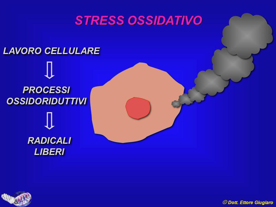 Sintesi del NO © Dott. Ettore Giugiaro AIRTeNN ROS, MITOCONDRI e ATEROSCLEROSI