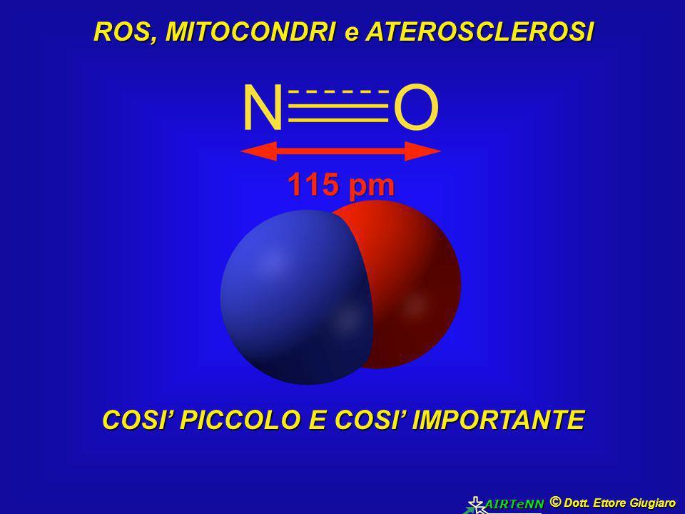 © Dott. Ettore Giugiaro AIRTeNN ROS, MITOCONDRI e ATEROSCLEROSI COSI' PICCOLO E COSI' IMPORTANTE