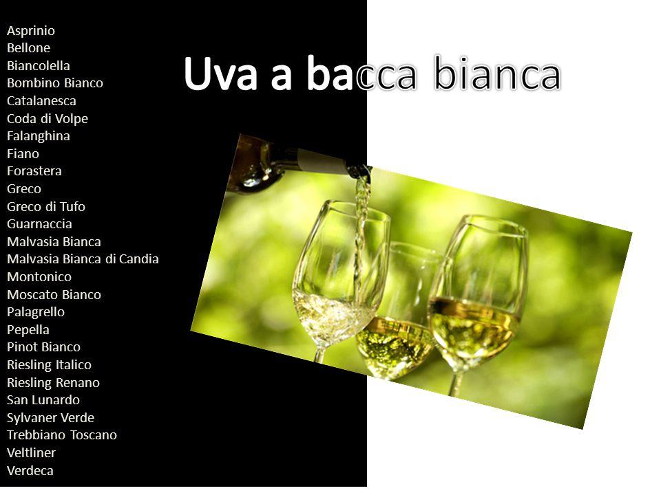 Asprinio Bellone Biancolella Bombino Bianco Catalanesca Coda di Volpe Falanghina Fiano Forastera Greco Greco di Tufo Guarnaccia Malvasia Bianca Malvas
