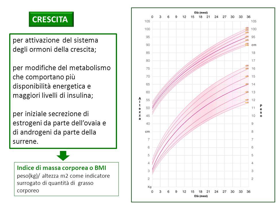 CRESCITA per attivazione del sistema degli ormoni della crescita; per modifiche del metabolismo che comportano più disponibilità energetica e maggiori livelli di insulina; per iniziale secrezione di estrogeni da parte dell'ovaia e di androgeni da parte della surrene.