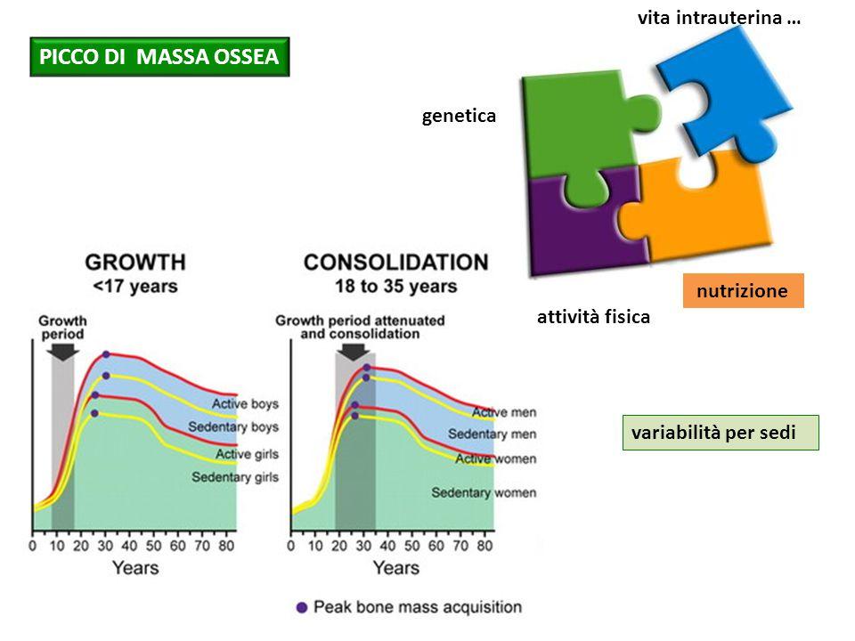 genetica attività fisica nutrizione variabilità per sedi PICCO DI MASSA OSSEA vita intrauterina …