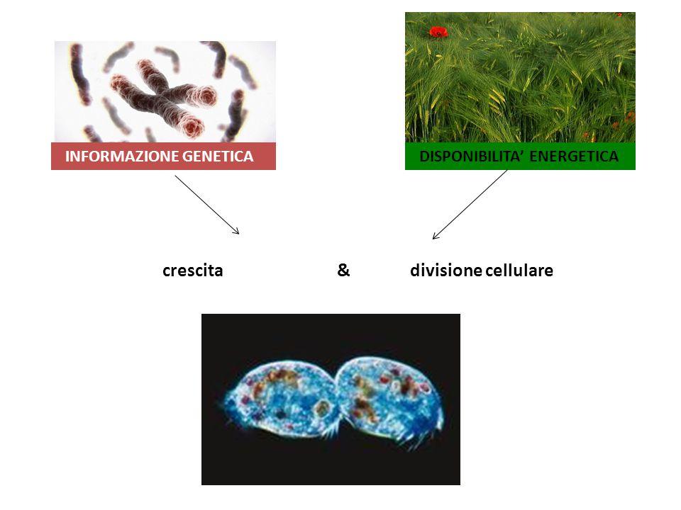 Gli organismi multicellulari devono coordinare il comportamento delle singole cellule e organi per sostenere funzioni vitali complesse.