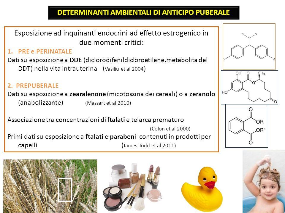 Esposizione ad inquinanti endocrini ad effetto estrogenico in due momenti critici: 1.PRE e PERINATALE Dati su esposizione a DDE (diclorodifenildicloroetilene,metabolita del DDT) nella vita intrauterina ( Vasiliu et al 2004 ) 2.