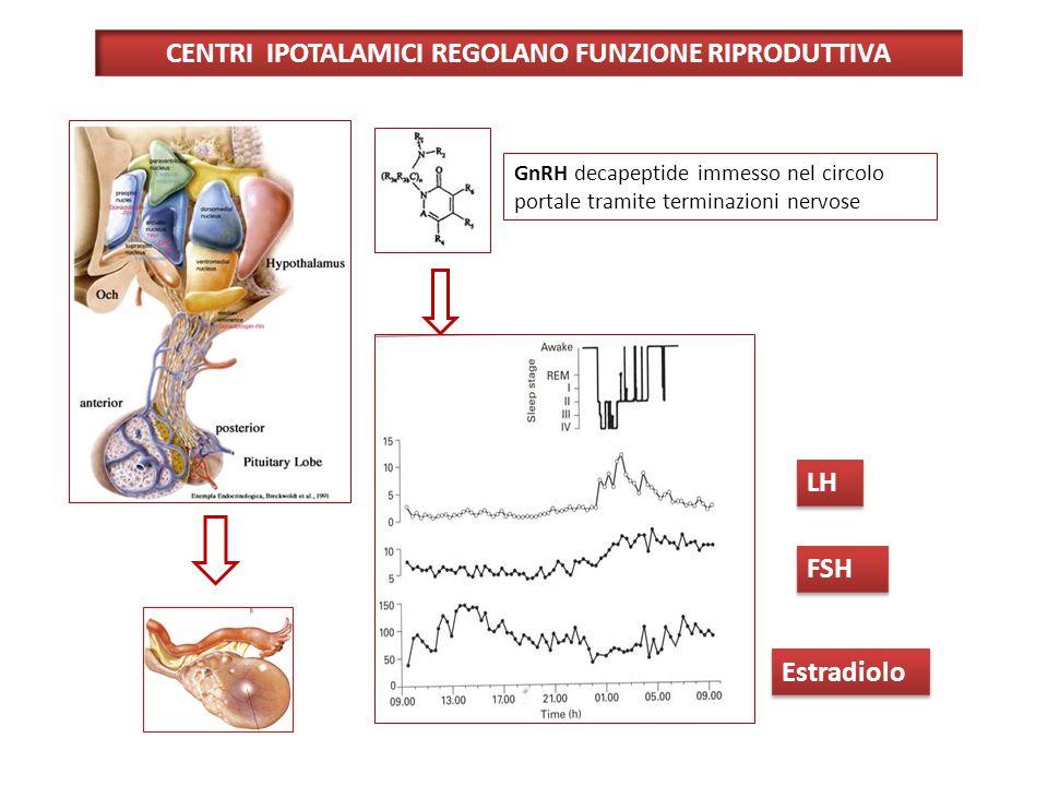 CENTRI IPOTALAMICI REGOLANO FUNZIONE RIPRODUTTIVA GnRH decapeptide immesso nel circolo portale tramite terminazioni nervose LH FSH Estradiolo