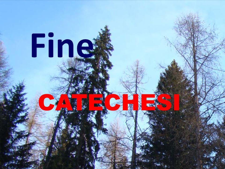 Fine CATECHESI