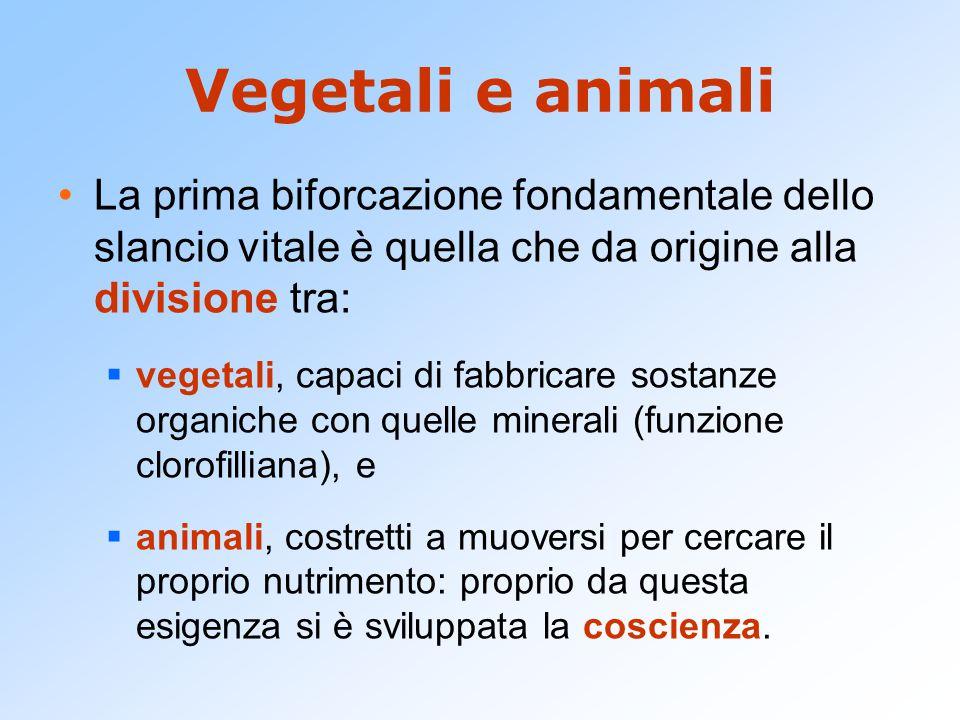 Vegetali e animali La prima biforcazione fondamentale dello slancio vitale è quella che da origine alla divisione tra:  vegetali, capaci di fabbricar