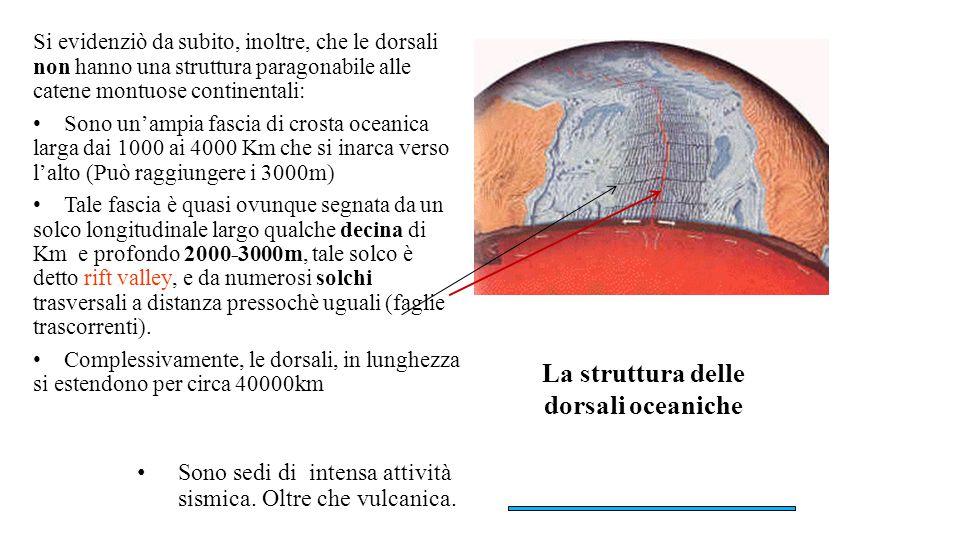 La struttura delle dorsali oceaniche Si evidenziò da subito, inoltre, che le dorsali non hanno una struttura paragonabile alle catene montuose contine