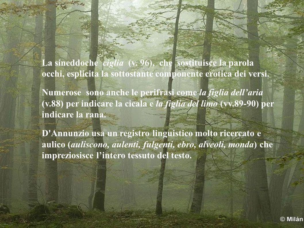 La sineddoche ciglia (v.
