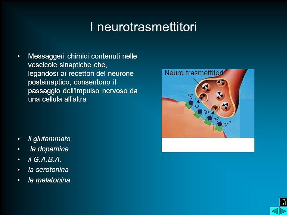 I neurotrasmettitori Messaggeri chimici contenuti nelle vescicole sinaptiche che, legandosi ai recettori del neurone postsinaptico, consentono il passaggio dell'impulso nervoso da una cellula all'altra il glutammato la dopamina il G.A.B.A.