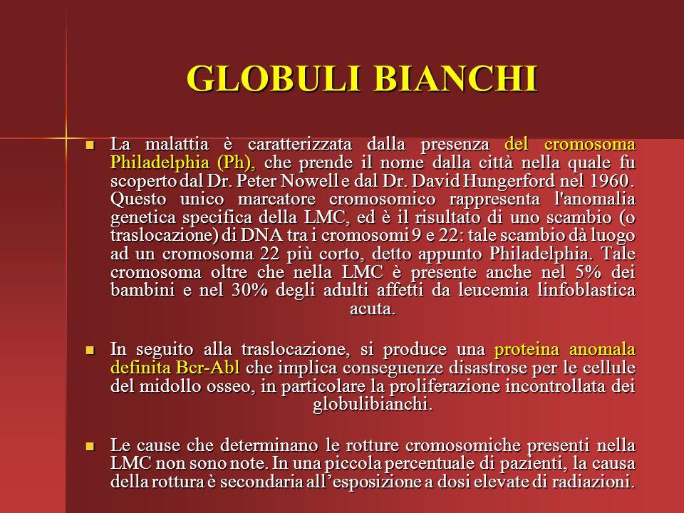 GLOBULI BIANCHI La malattia è caratterizzata dalla presenza del cromosoma Philadelphia (Ph), che prende il nome dalla città nella quale fu scoperto da
