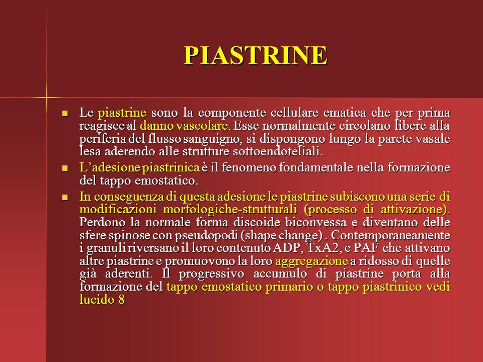 PIASTRINE Le piastrine sono la componente cellulare ematica che per prima reagisce al danno vascolare. Esse normalmente circolano libere alla periferi