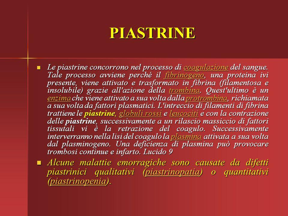 PIASTRINE Le piastrine concorrono nel processo di coagulazione del sangue. Tale processo avviene perché il fibrinogeno, una proteina ivi presente, vie