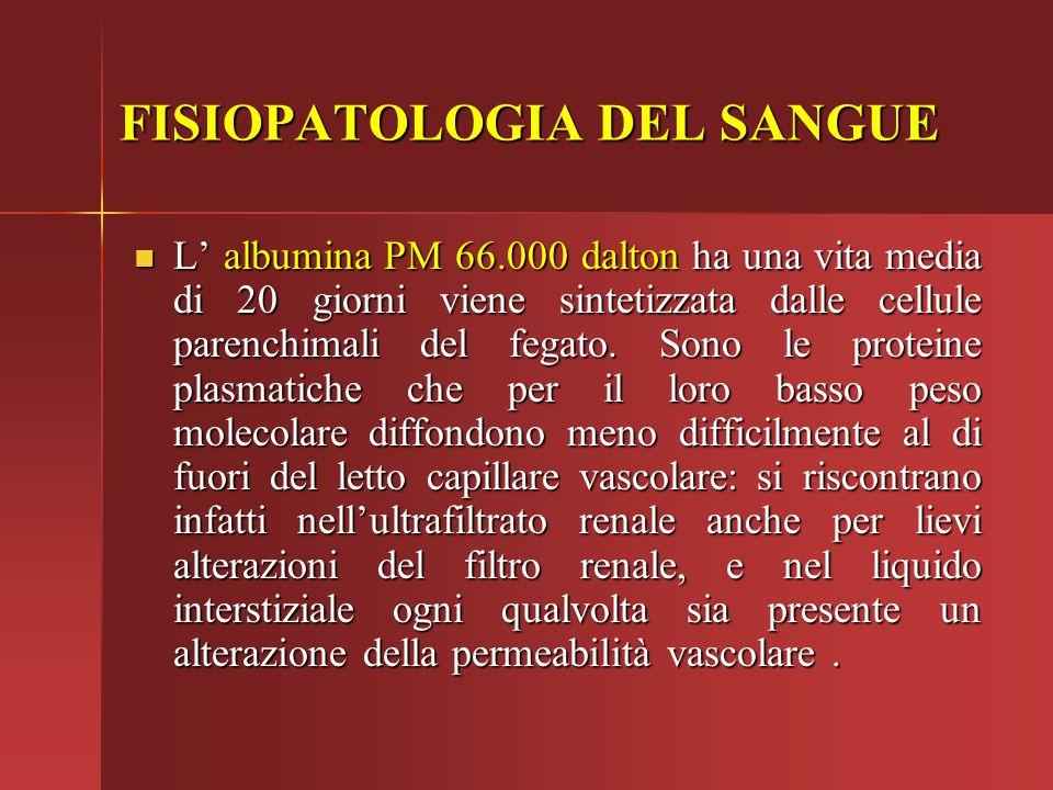 L' albumina PM 66.000 dalton ha una vita media di 20 giorni viene sintetizzata dalle cellule parenchimali del fegato. Sono le proteine plasmatiche che