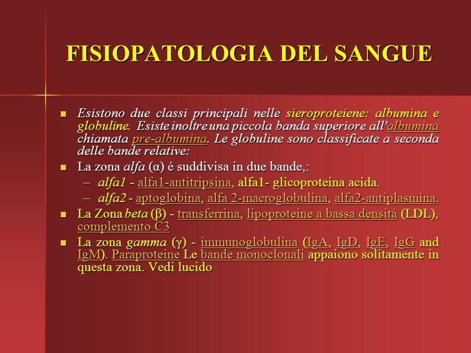 FISIOPATOLOGIA DEL SANGUE Esistono due classi principali nelle sieroproteiene: albumina e globuline. Esiste inoltre una piccola banda superiore all'al