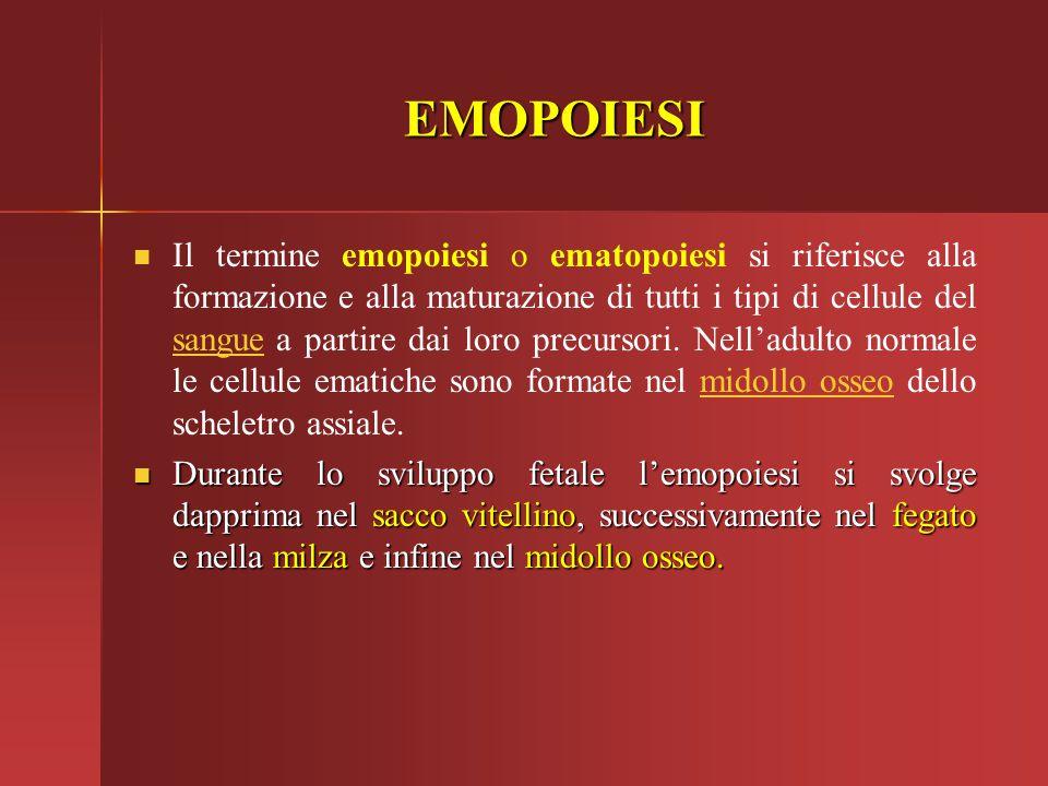 EMOPOIESI Il termine emopoiesi o ematopoiesi si riferisce alla formazione e alla maturazione di tutti i tipi di cellule del sangue a partire dai loro