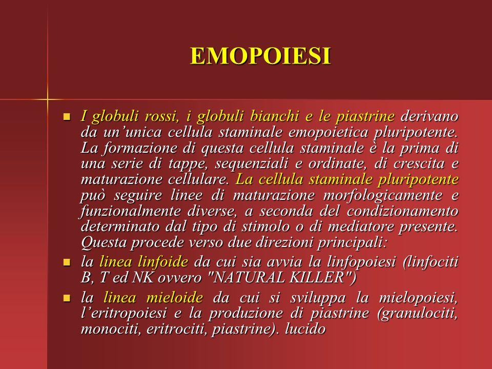 I globuli rossi, i globuli bianchi e le piastrine derivano da un'unica cellula staminale emopoietica pluripotente. La formazione di questa cellula sta