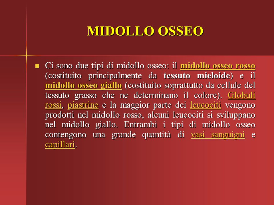 Ci sono due tipi di midollo osseo: il midollo osseo rosso (costituito principalmente da tessuto mieloide) e il midollo osseo giallo (costituito soprat