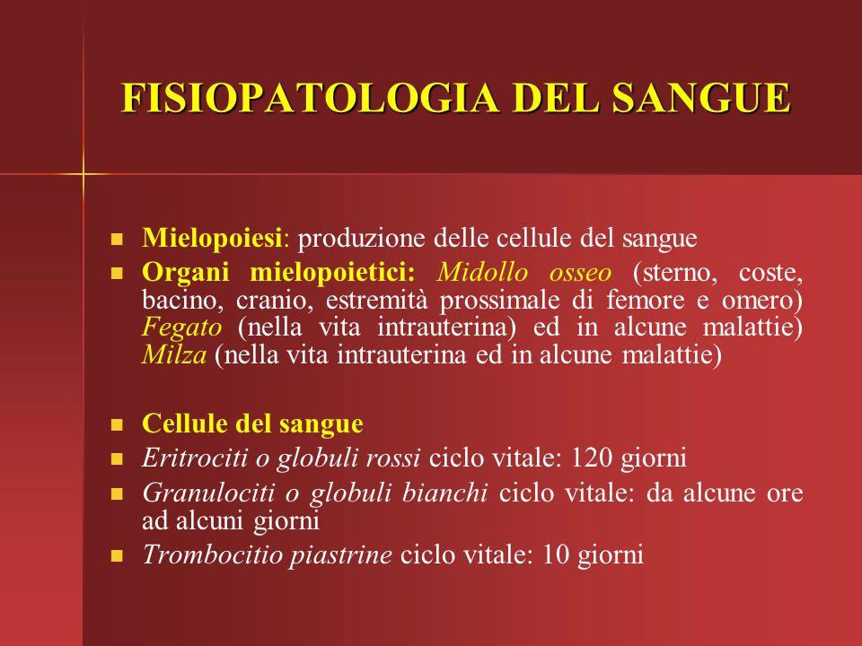 FISIOPATOLOGIA DEL SANGUE Mielopoiesi: produzione delle cellule del sangue Organi mielopoietici: Midollo osseo (sterno, coste, bacino, cranio, estremi